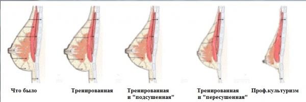dobitsya-uprugosti-chlena